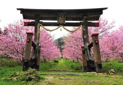 蘇羅比古神社(庄原市)春の風景、丘の上の桜並木