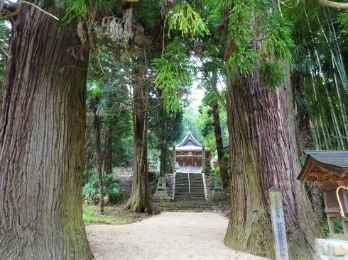 蘇羅比古神社 大杉2
