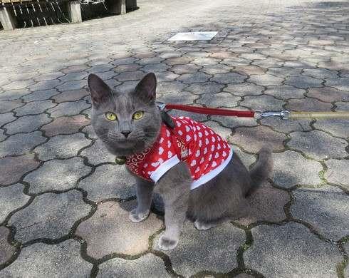 花みどり公園をお散歩しているネコ