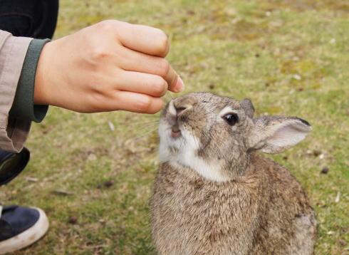 GWのウサギ島(大久野島)は竹原港から!モフモフ子うさぎに会いにいこう
