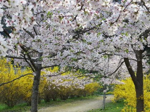 安野花の駅公園 の風景2