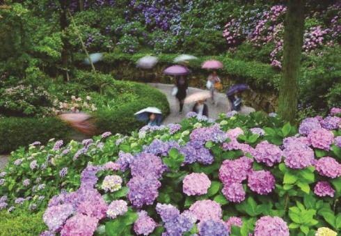 三景園 花まつり、100種1万株のあじさいが見ごろ!