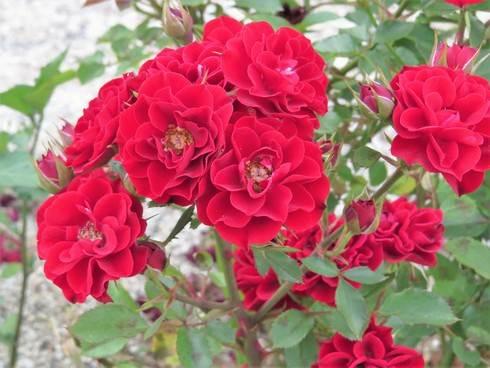 福山・春日池公園の花たち