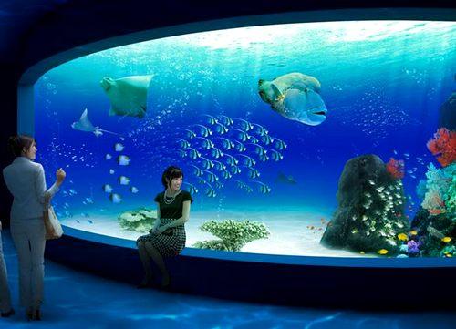 マリホ水族館、2017年夏 広島市にオトナの癒しスポット誕生