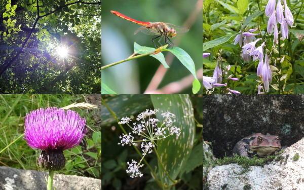 庄原 比婆山登山・トレッキングで見られた花や虫たち