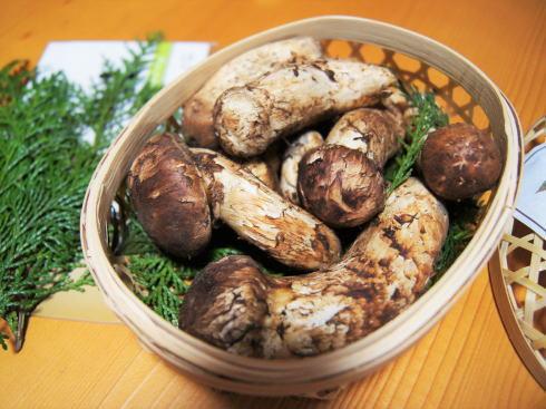 世羅まつたけ村 シーズン本格化、松茸ごはんプレゼントの感謝デー開催も