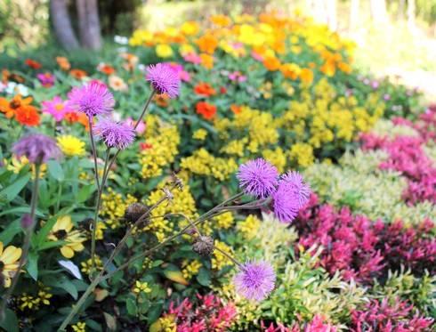 広島・湧永庭園で秋の花が咲き始め