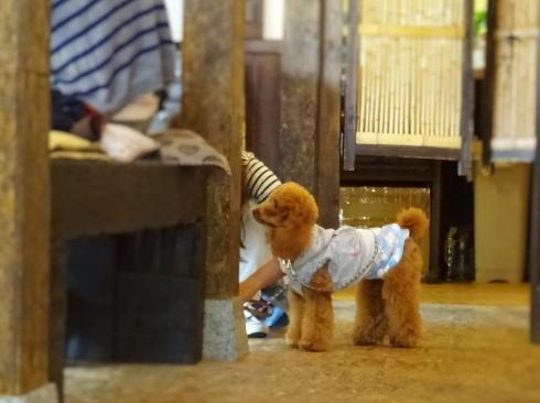 ドッグカフェ わん茶房'S(わんちゃぼうず)に犬連れで