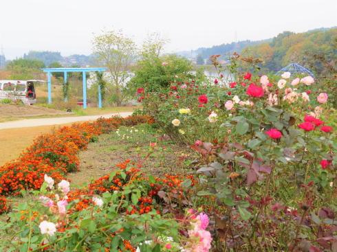 福山市 富谷ドームランドの花壇