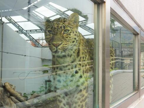 福山市立動物園 動物たち