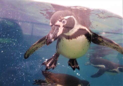 福山市立動物園は中学生まで無料!家族で1日中楽しめるスポット