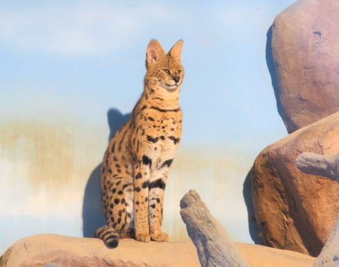 福山市立動物園 動物たち2