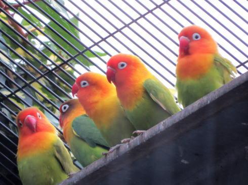 福山市立動物園 鳥たち