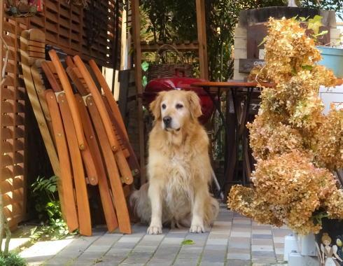 世羅 ガーデンカフェ イオ 犬もいるよ