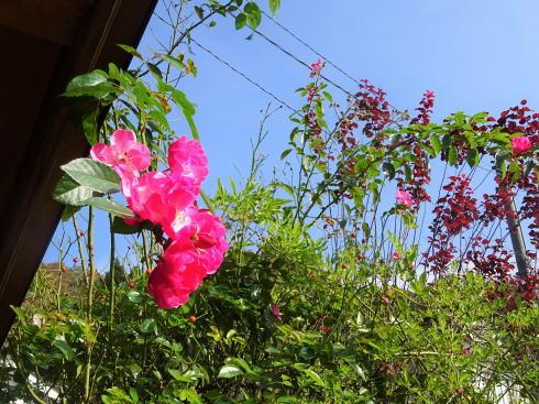 世羅 ガーデンカフェ イオ 庭の様子2