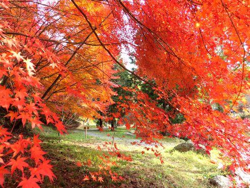 四季の里の紅葉が見頃に