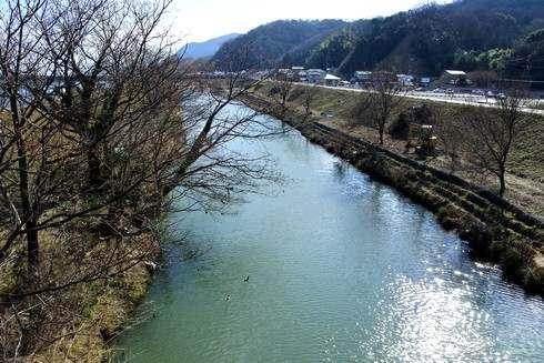 ヌートリアが泳いでいた芦田川
