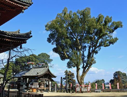 福山市 明王院の写真8