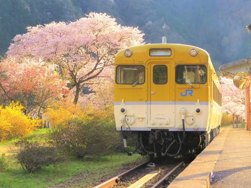 安野花まつり開催!春に魅力MAXのフォトジェニックスポット「花の駅」