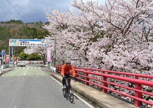 土師ダム レンタサイクルで桜のトンネルを走る