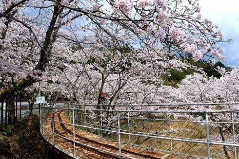 土師ダム サイクル列車の道