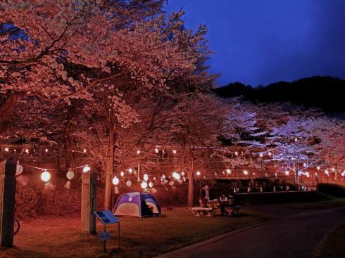 土師ダム 夜桜(提灯ライトアップ)の様子3