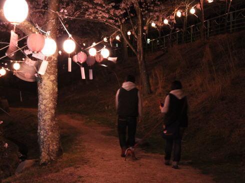 土師ダム 夜桜(提灯ライトアップ)の様子2