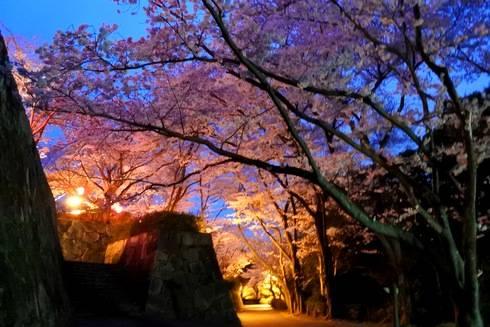 亀居公園の夜桜、亀井城跡