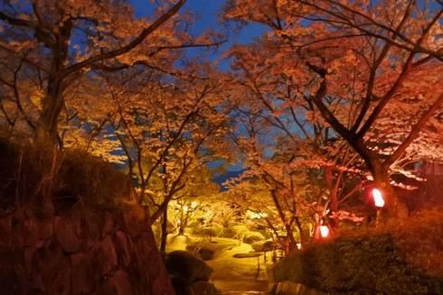 亀居公園の夜桜、サクラのトンネル