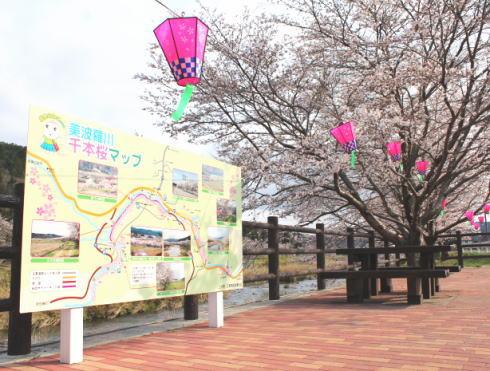 三次市 美波羅川千本桜の写真5