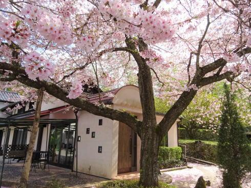 広島市安佐北区 白木 サコダノサクラ 桜と外観