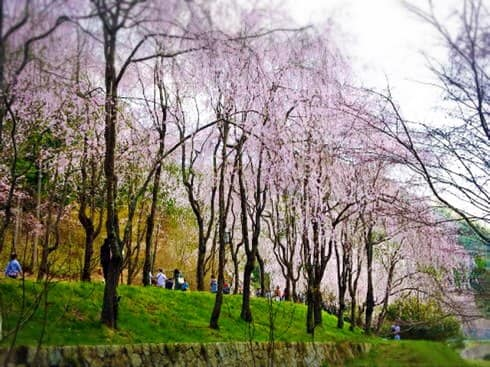 世羅 甲山ふれあいの里 画像2