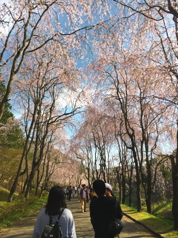 世羅 甲山ふれあいの里 画像3