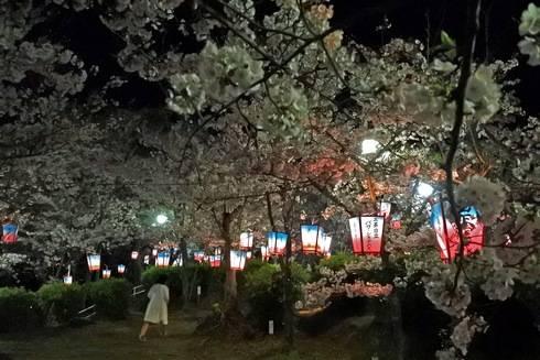 正福寺山公園、ボンボリが並ぶ桜の道