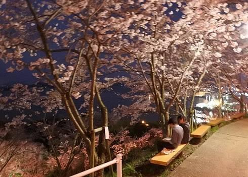 正福寺山公園、桜の道にあるベンチ