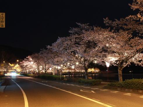 上野公園(庄原)桜並木をライトアップ、湖上の島もキラキラと