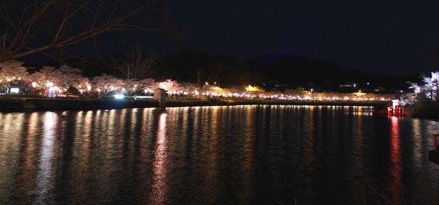 上野公園(庄原)夜桜ライトアップ 画像6