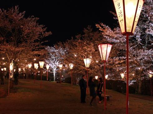 上野公園(庄原)夜桜ライトアップ 画像3