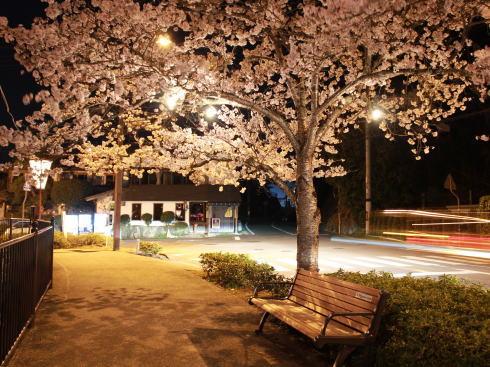 上野公園(庄原)夜桜ライトアップ 画像