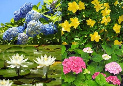 三景園で花まつり