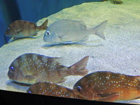 マリホ水族館 お魚