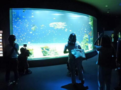 マリホ水族館 ラグーン水槽2