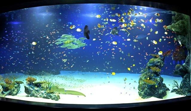 マリホ水族館 ラグーン水槽