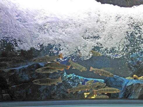 マリホ水族館 渓流のうねる流れゾーン
