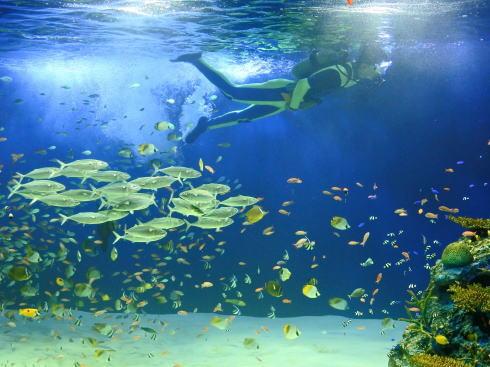 マリホ水族館 ラグーン水槽4