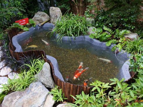 マリホ水族館 カープ鯉の池