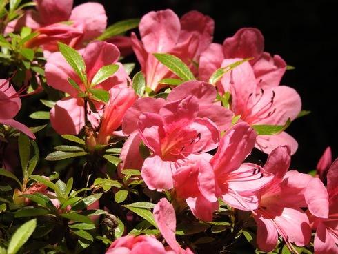 三景園の花まつり