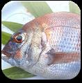 瀬戸内海の魚介類