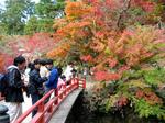 宮島 紅葉谷公園(もみじ谷公園)赤や黄色で色づき、観光客うっとり