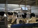 リストーロ 東城町の手作り牧場ジェラート!動物ふれあい広場も